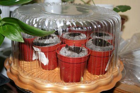 Таблетки-с-семенами-нужно-накрыть-крышкой-или-пленкой.jpg
