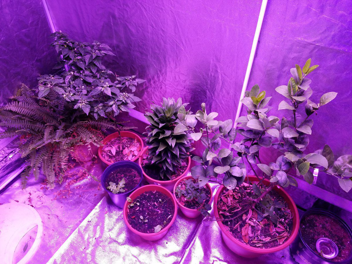 20161206_102555.jpg ... & Grow tent setup | Gardening Forums
