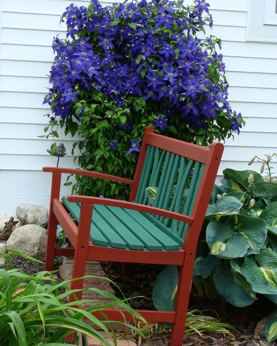 2017-6-16 bench and clematis.JPG