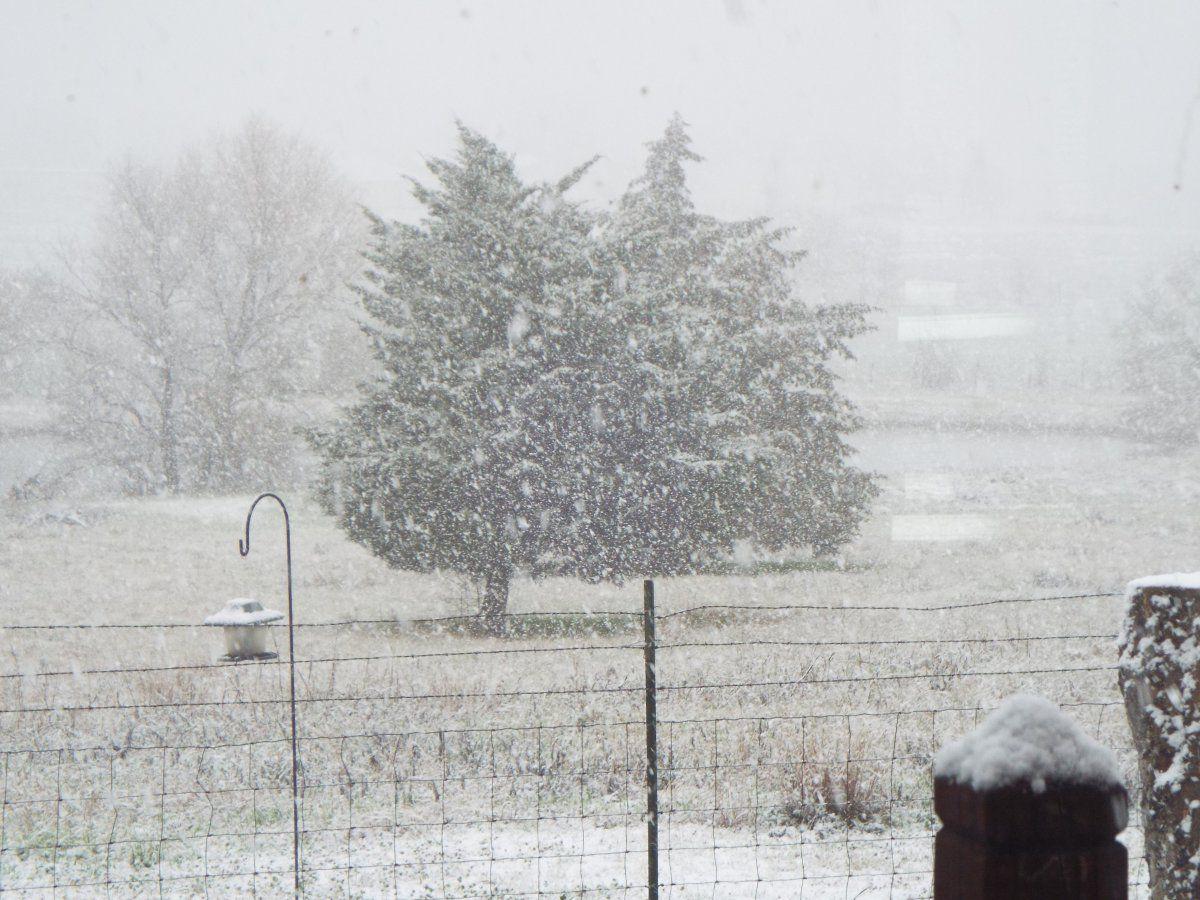 3-15 Snow 2.JPG