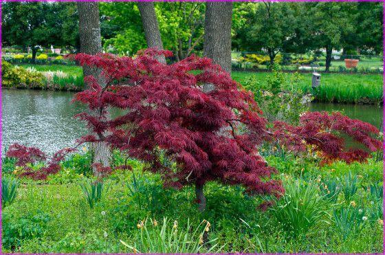 Formación Hermosos arbustos florecientes en árboles ornamentales únicos