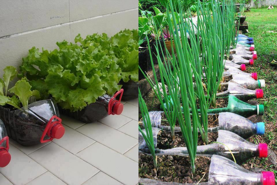 Making a planter from plastic bottles gardening forums - Plastic bottles for gardening ...