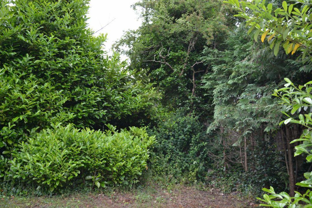 A bit overgrown.JPG