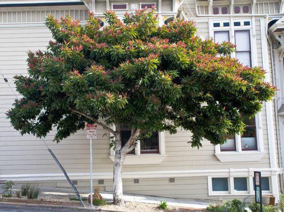 AA.-Erio-deflex-tree2Adam.jpg