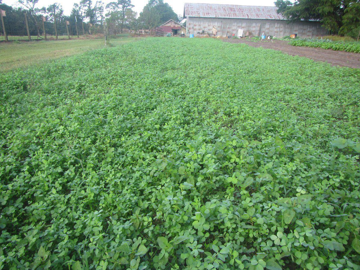 alfalfa late 2021.JPG