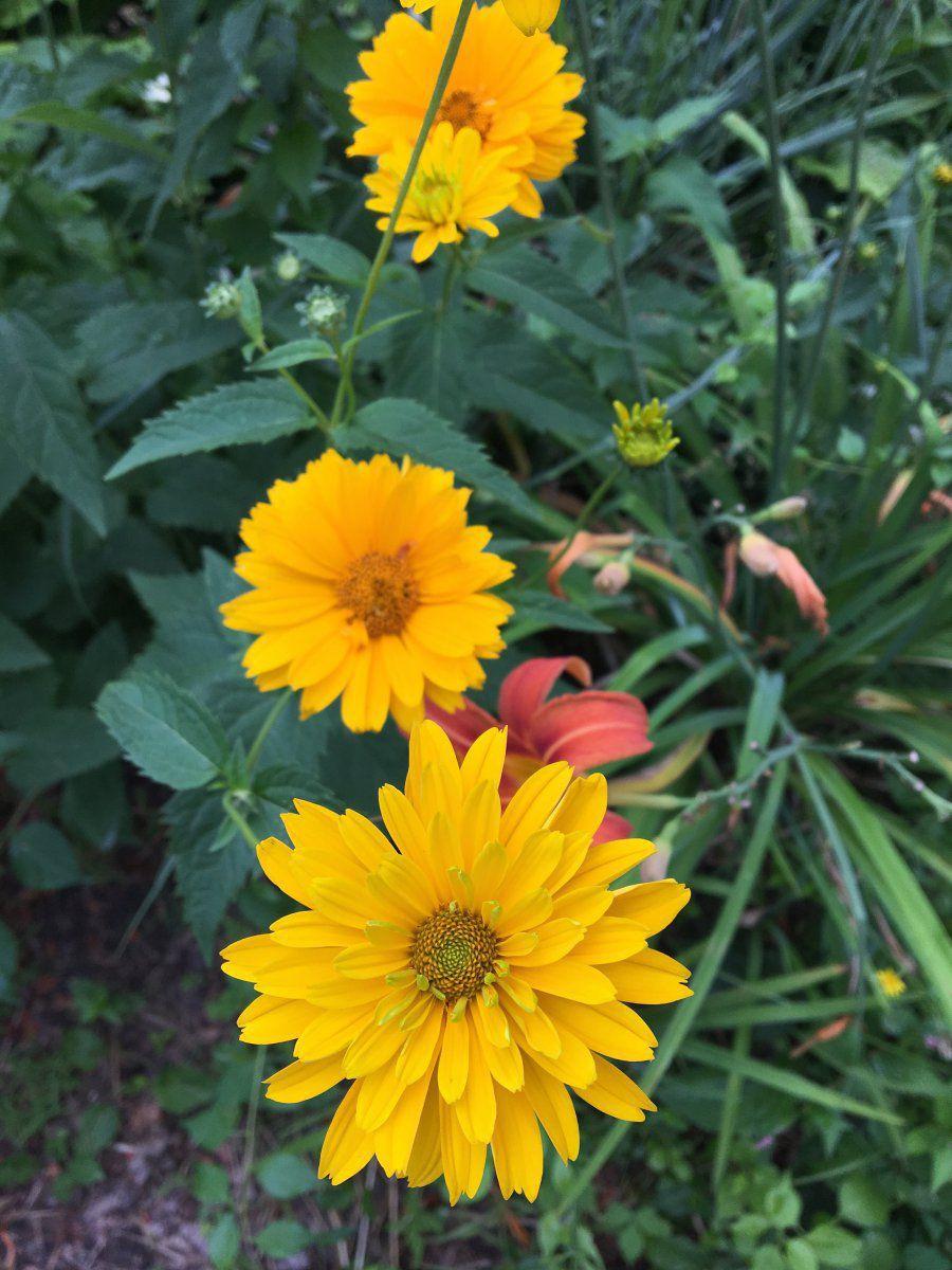 Area 01 - sunflower no1.jpeg