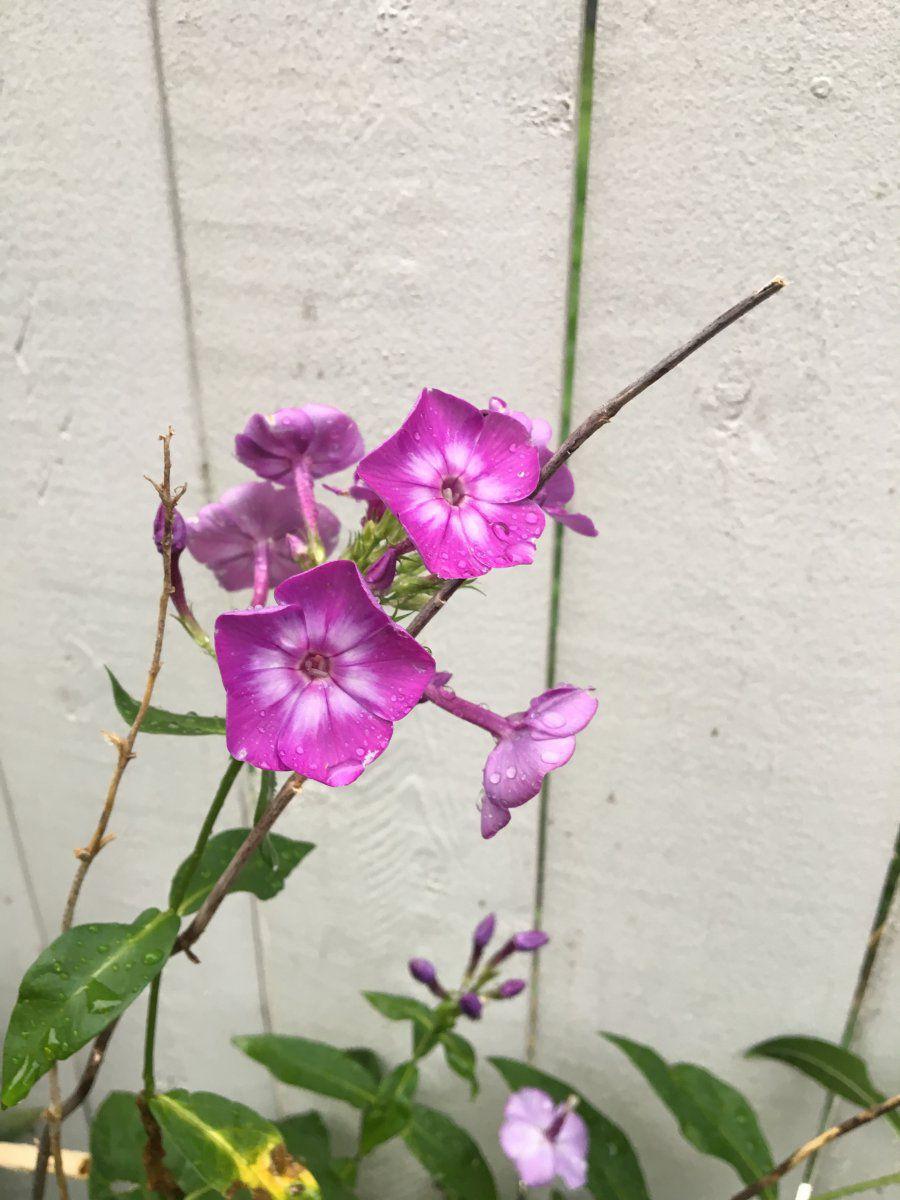 Area 06 - purple flower -no2.jpeg