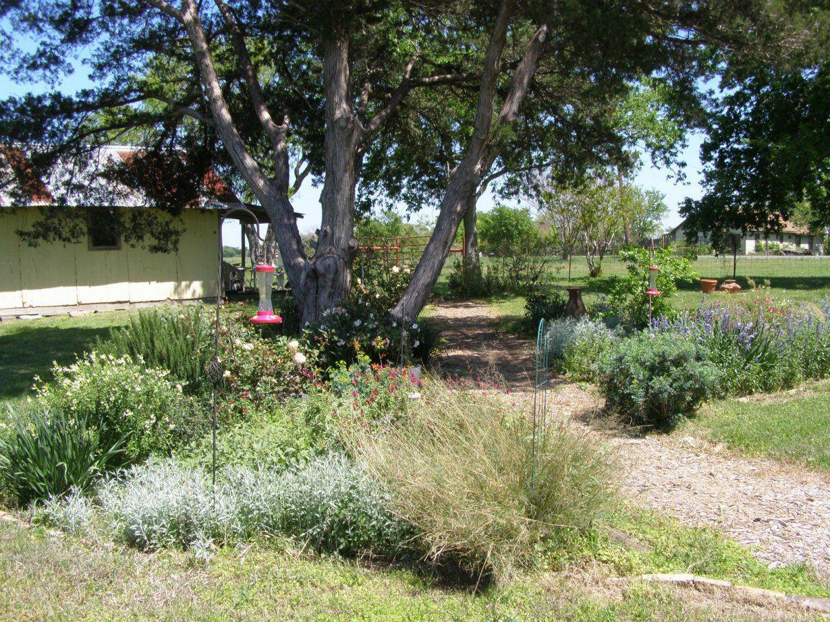 backyard garden.jpg