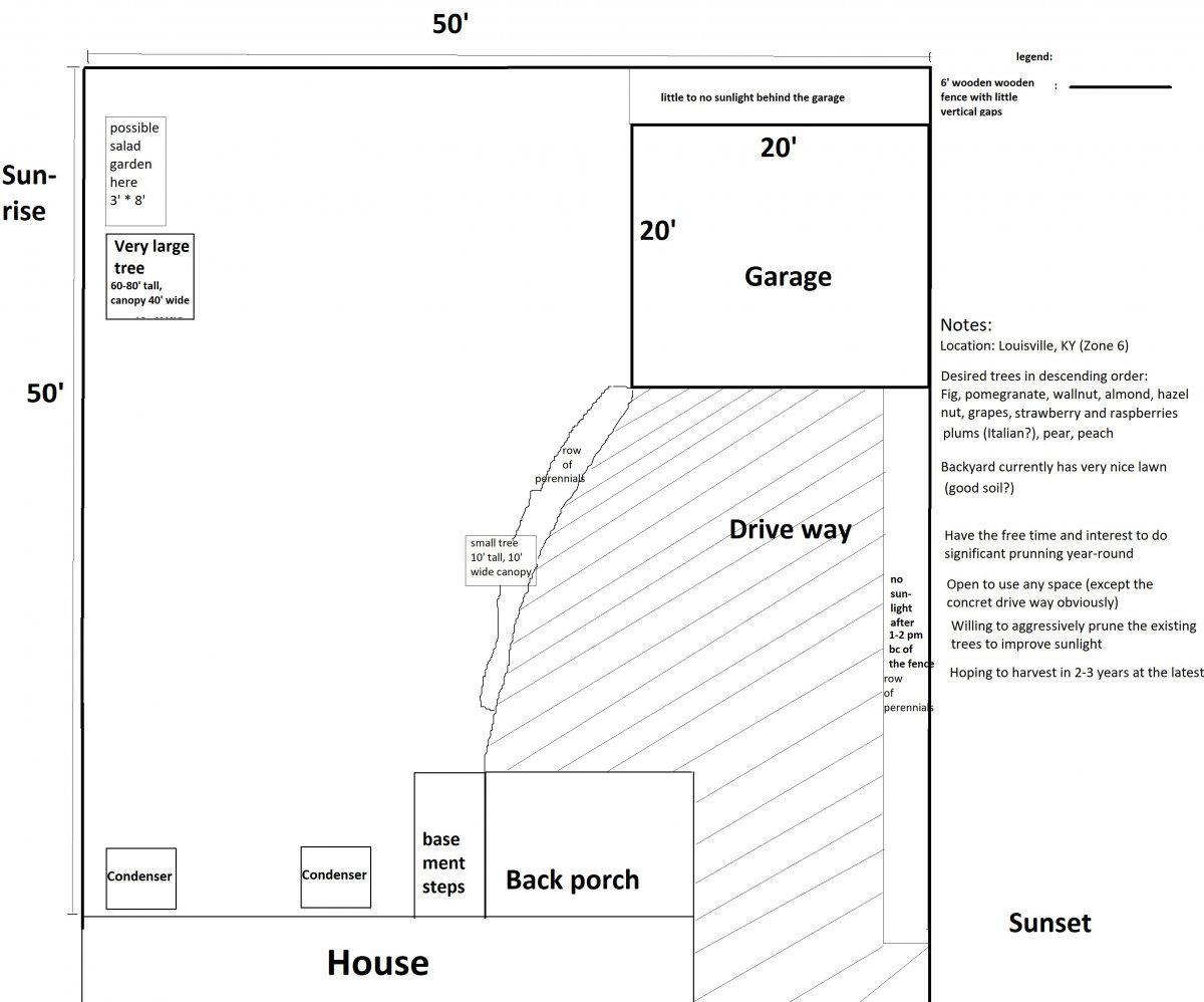 backyard plan.jpg