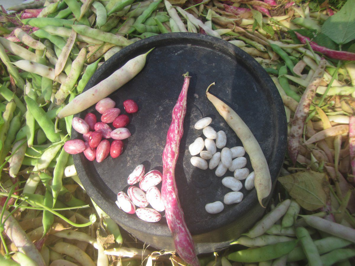 beans 2021.JPG