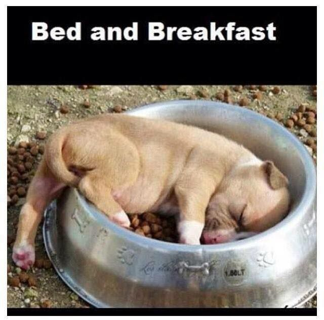 Bed and breakfast.jpg