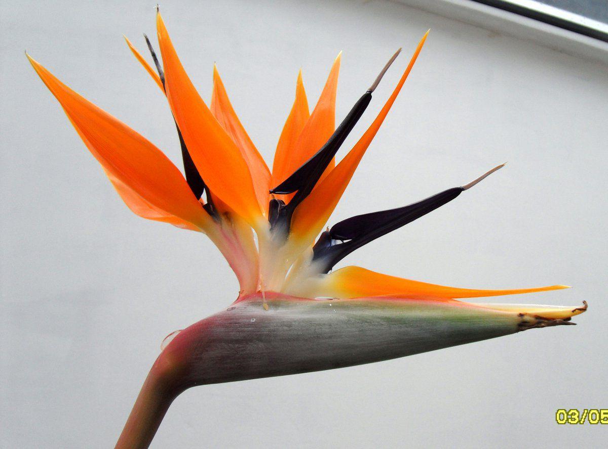 BirdPara.jpg