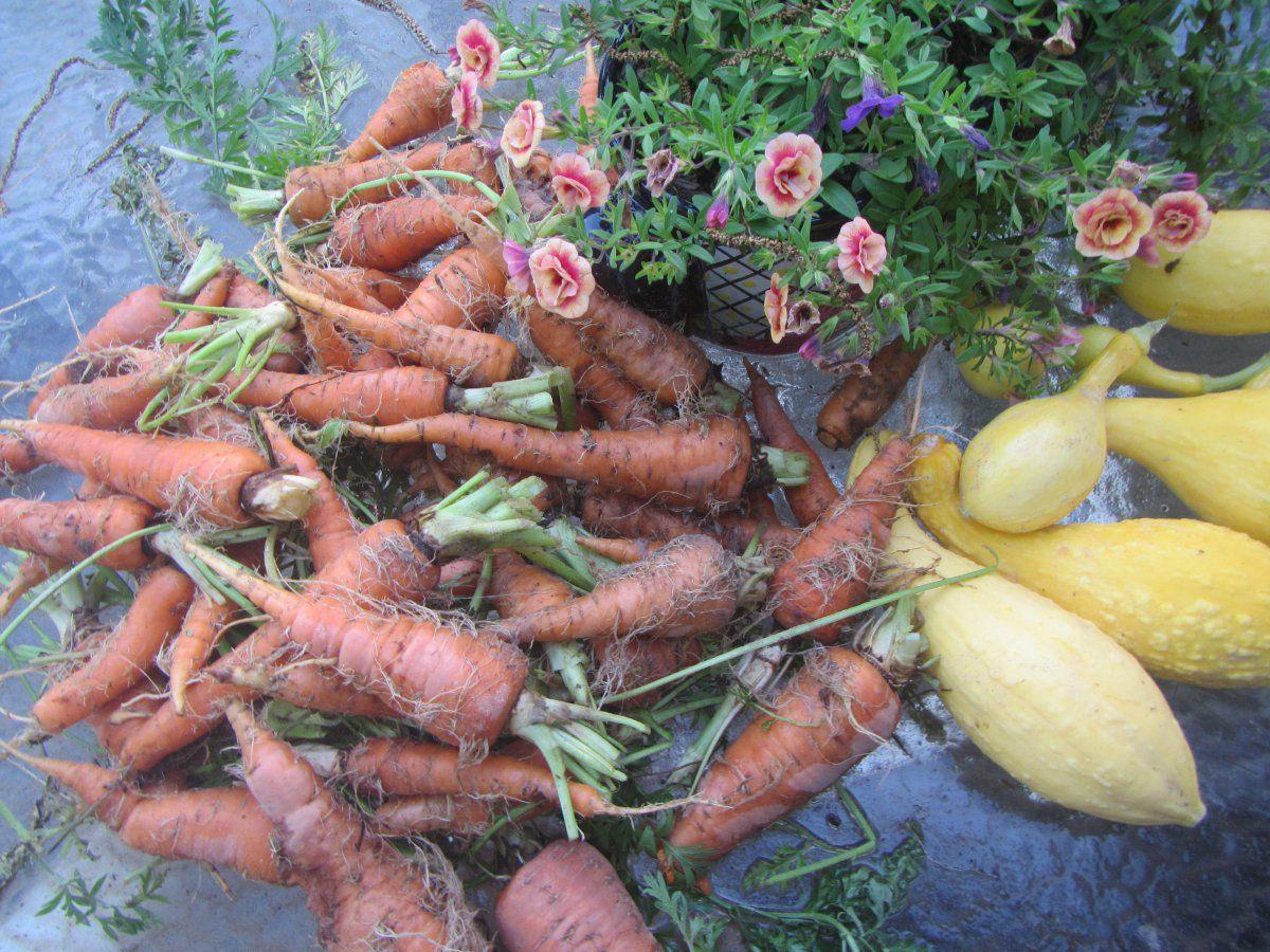 carrots and squash.JPG