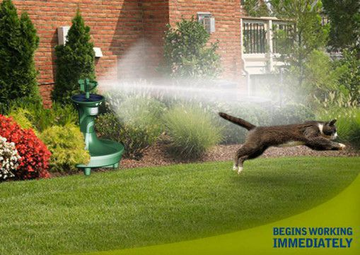 Advice for keeping cats out of gardens gardening forums