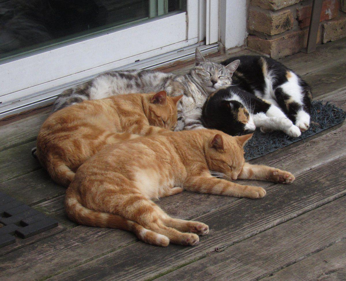 Cats z.jpg
