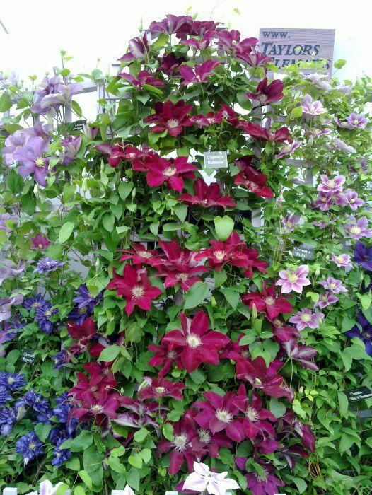 Vines that grow on brick walls | Gardening Forums