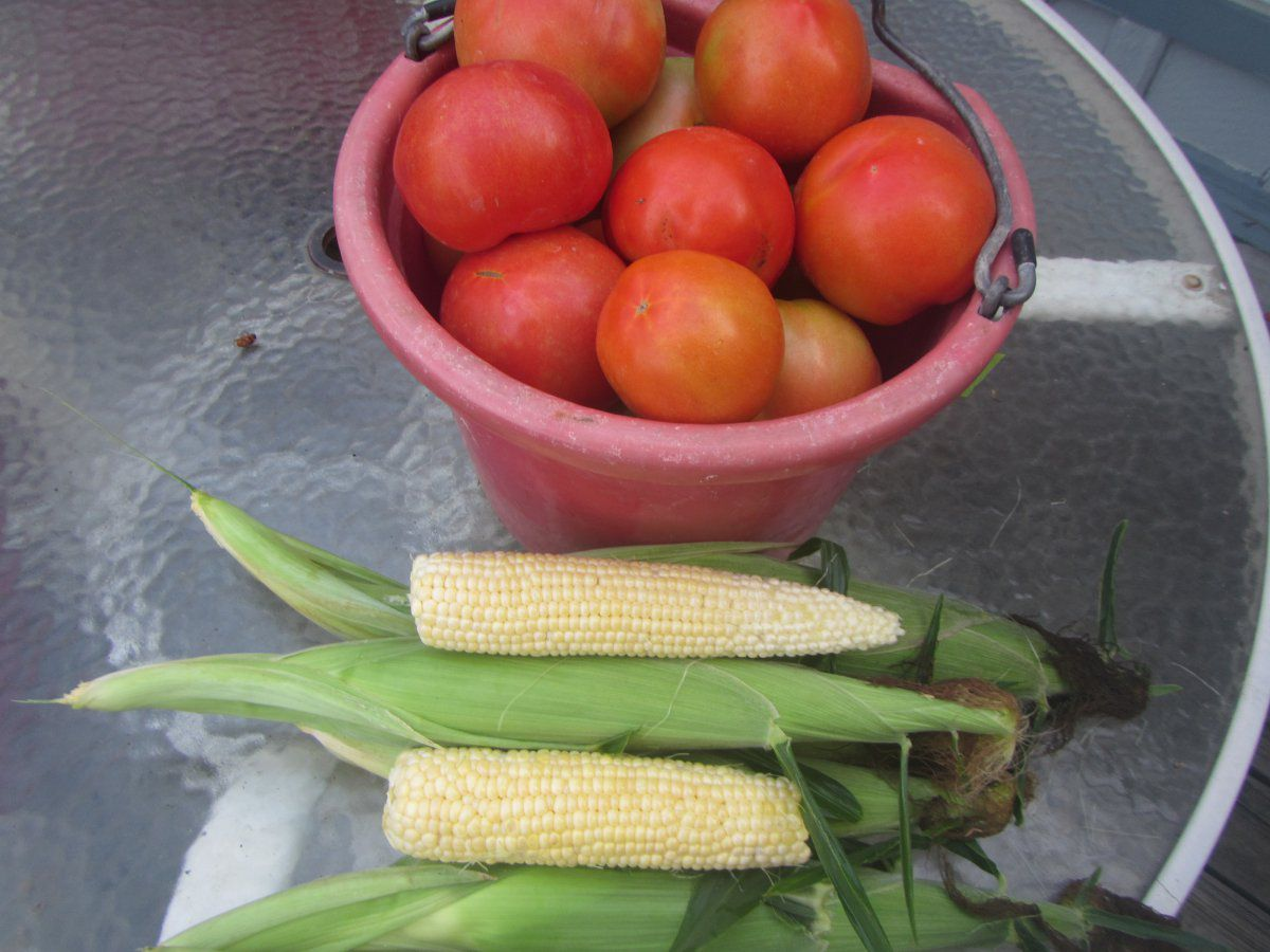 corn and tomatoes.JPG