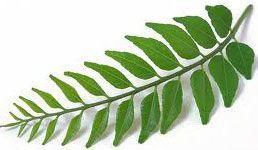 curry-leaves.jpg