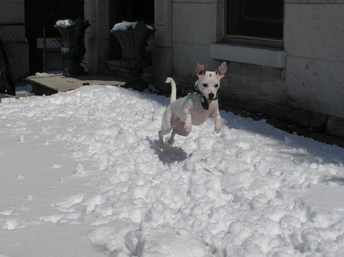 Dancer 1st snow.JPG
