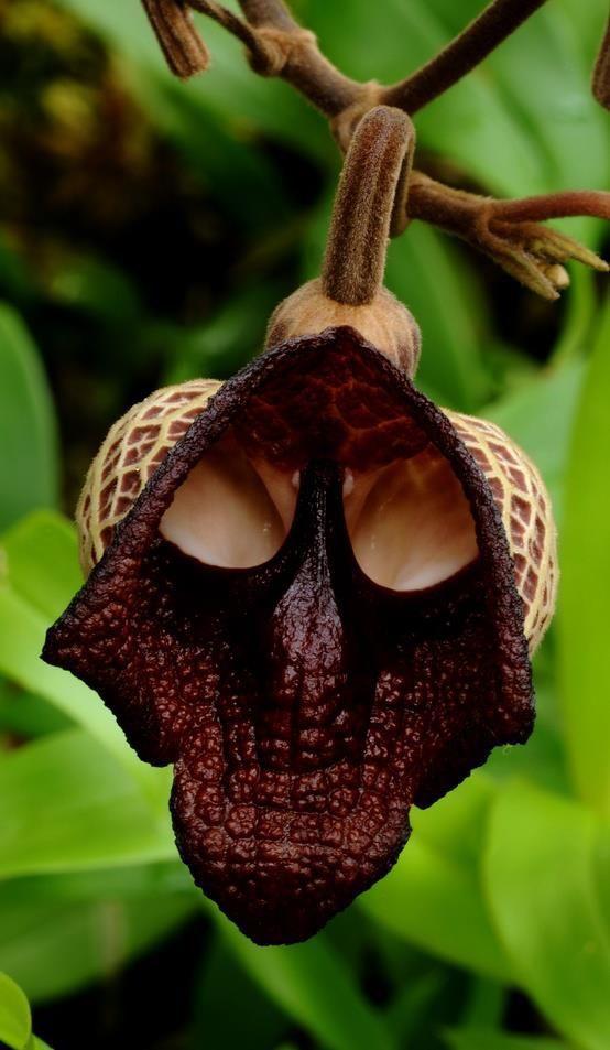 darthvarer flower.jpg
