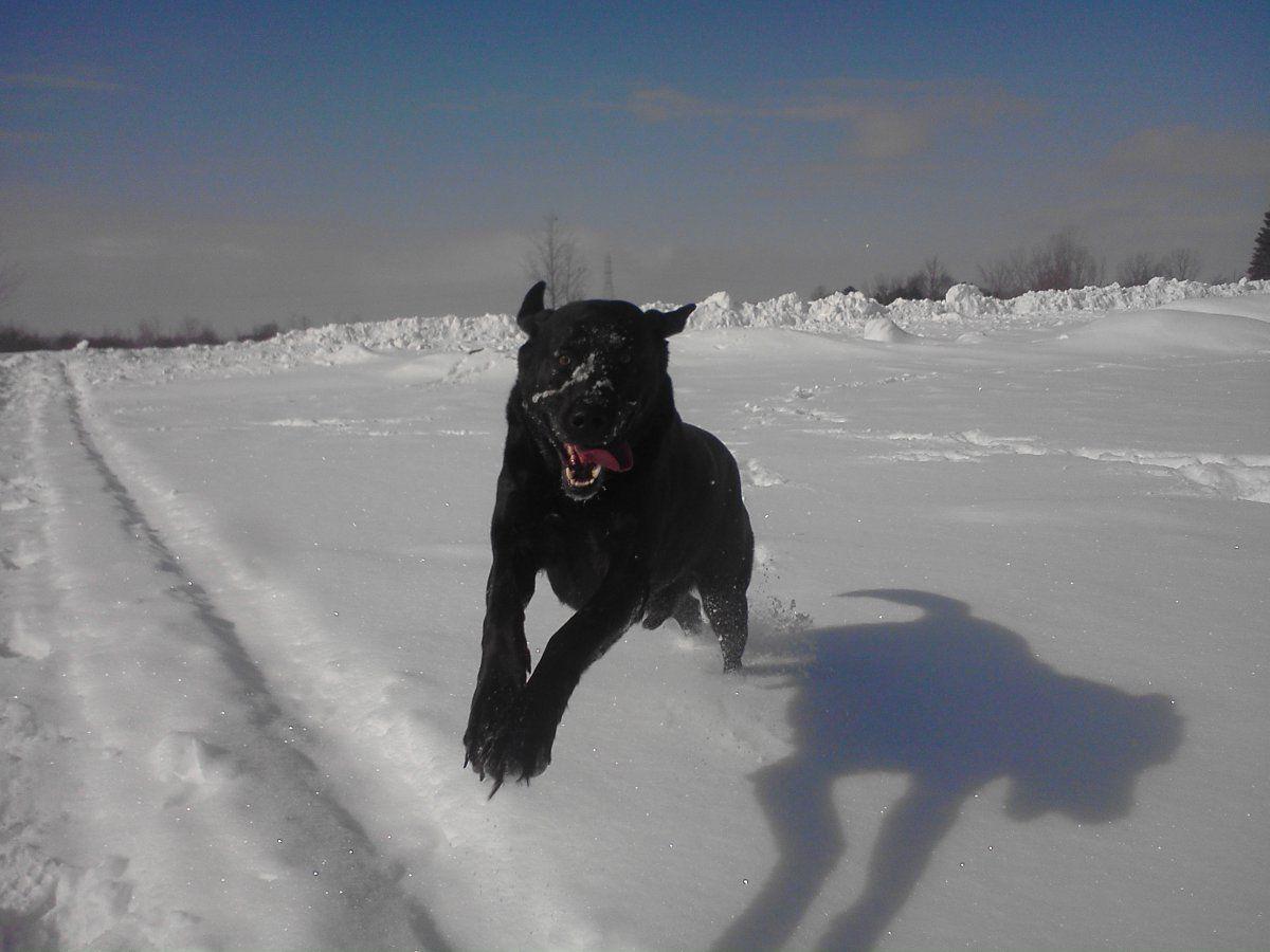 Deefie snow.jpg