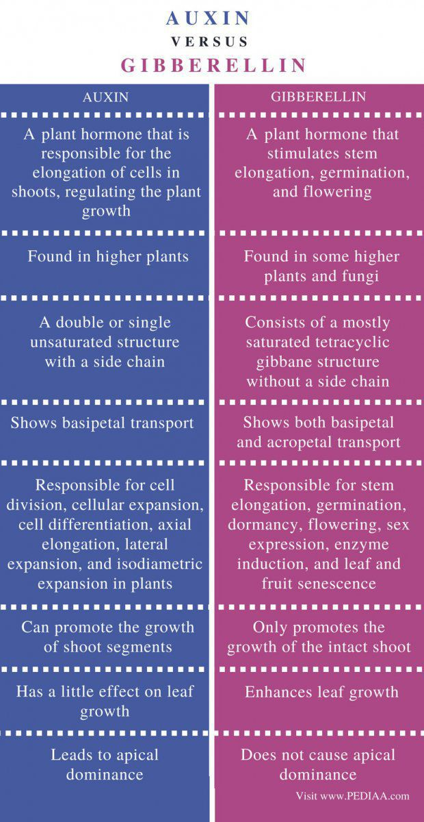 Difference-Between-Auxin-and-Gibberellin-Comparison-Summary.jpg