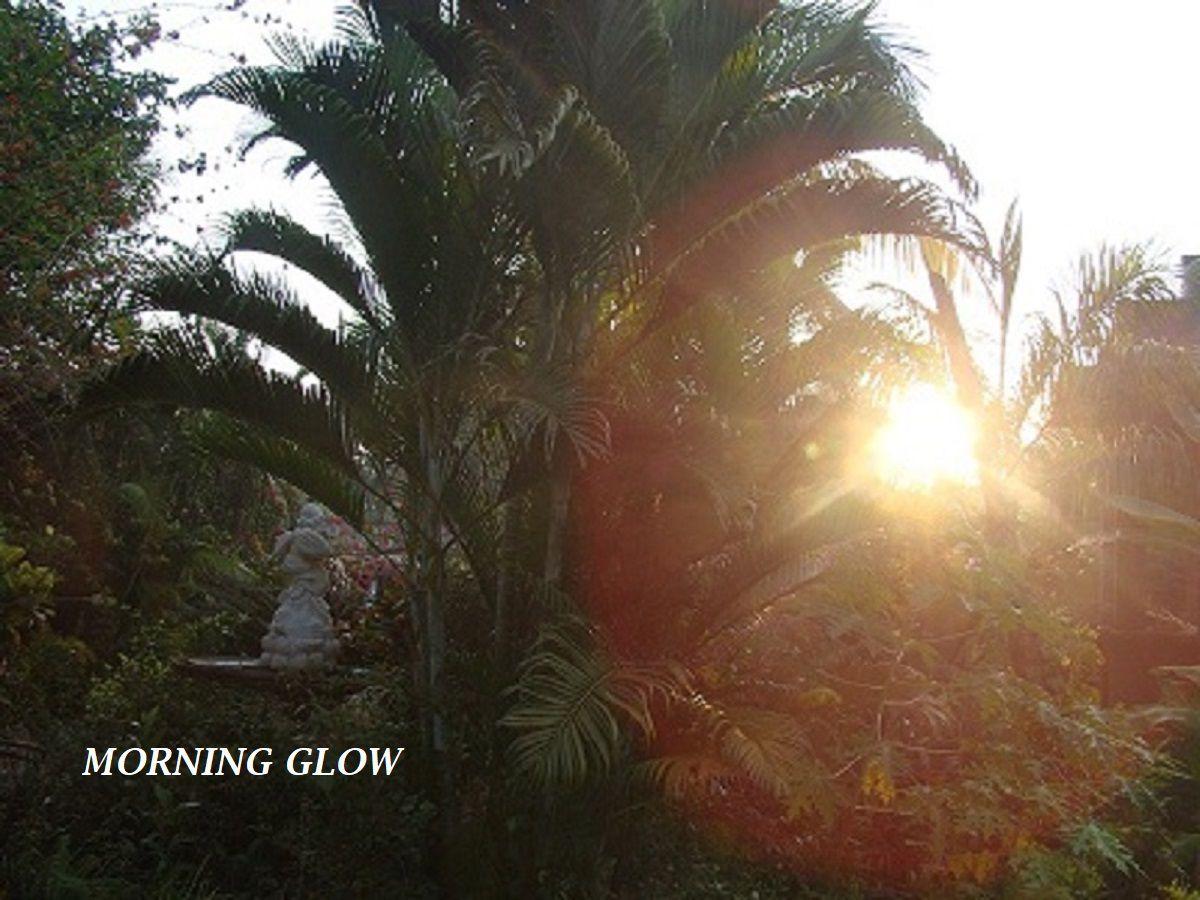 early morning sunrise.JPG