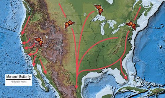 fallmigrationmap.jpg