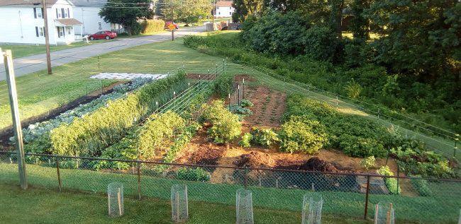 Flourishing Garden Summer 2017.jpg