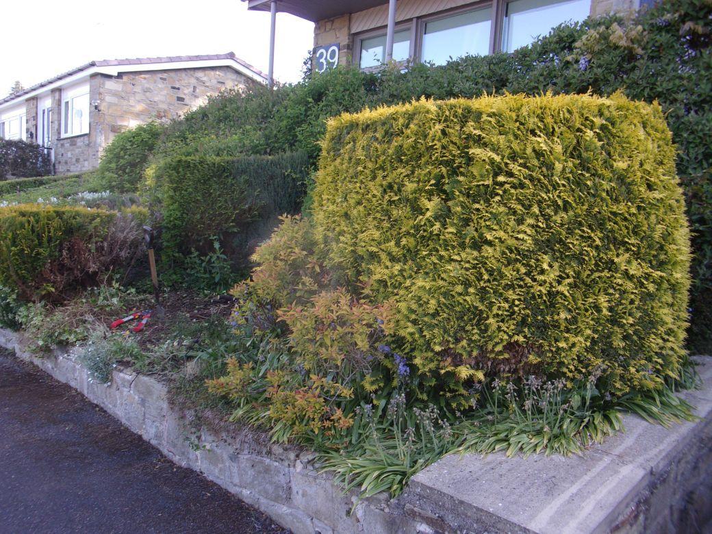 Front garden_002.JPG