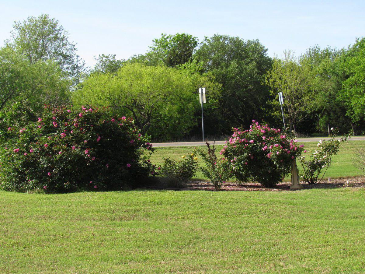 front roses.jpg