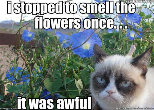 Funny Garden Memes - I stopped to smell the flowers.jpg
