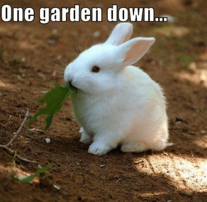 Funny Garden Memes - Rabbit .png