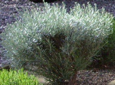 garden 3 (3).JPG