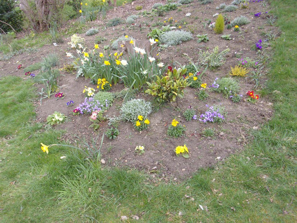 Garden March 19_009.JPG