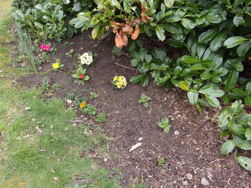 Garden March 19_010.JPG