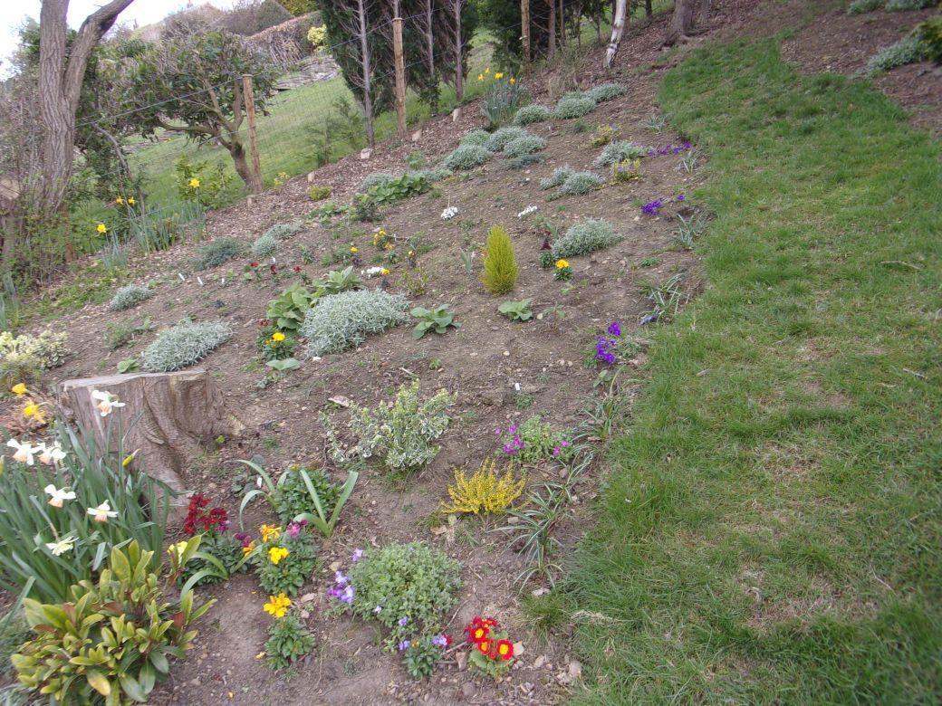 Garden March 19_011.JPG