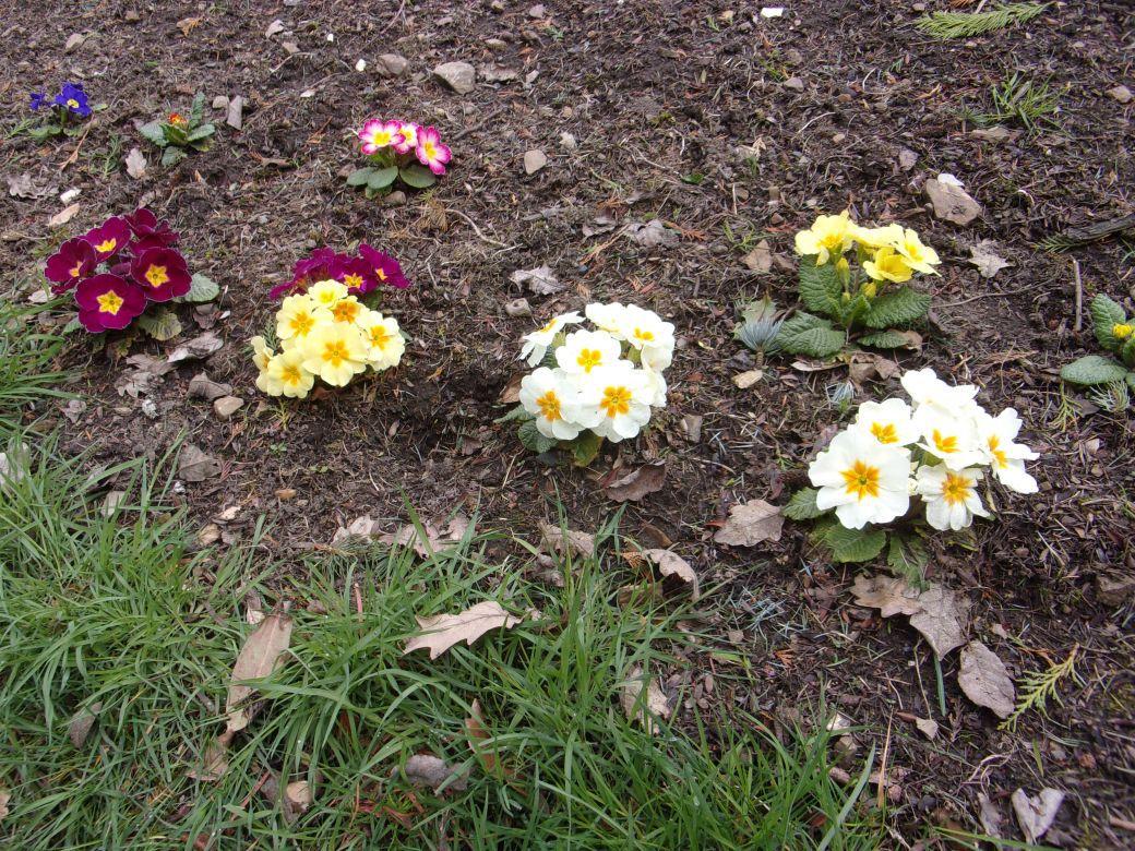 Garden March 19_013.JPG