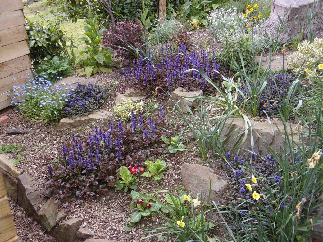 Garden May 2019_002.JPG