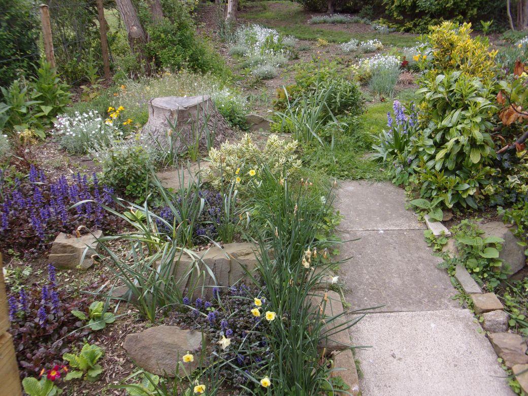 Garden May 2019_003.JPG