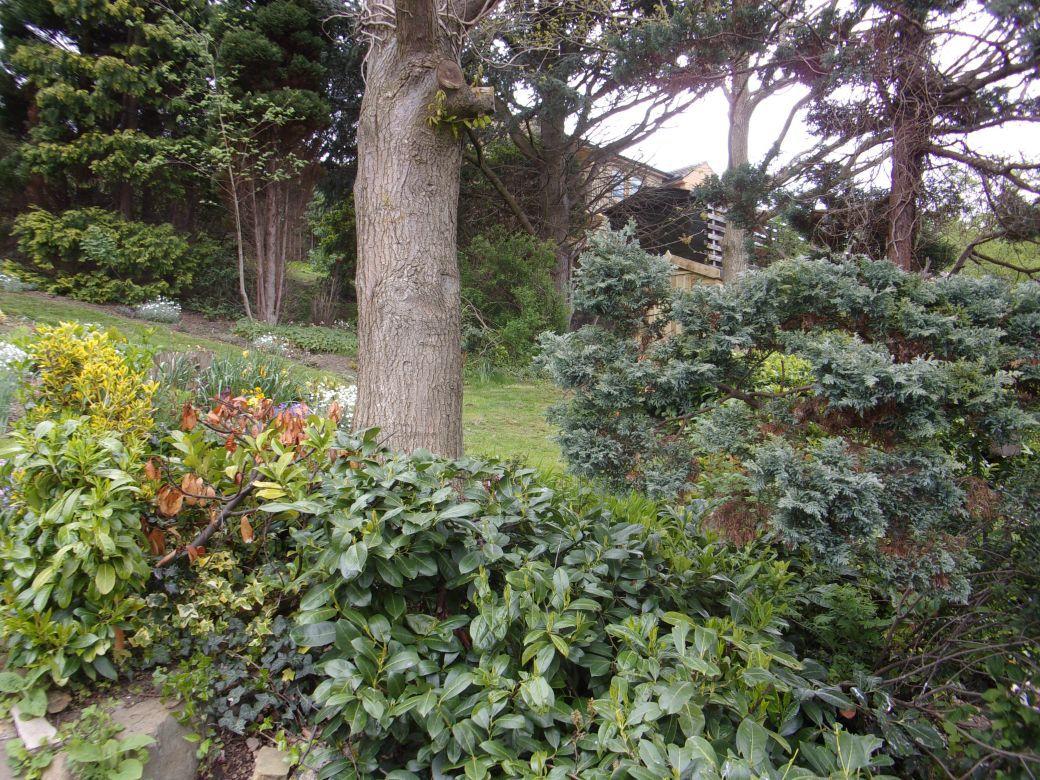 Garden May 2019_005.JPG