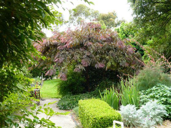 Árboles ornamentales y arbustos con follaje rojizo rojizo | Foros de jardinería