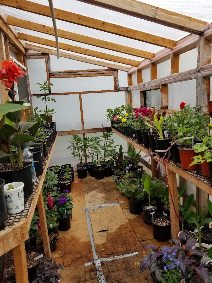 greenhouse3.jpg
