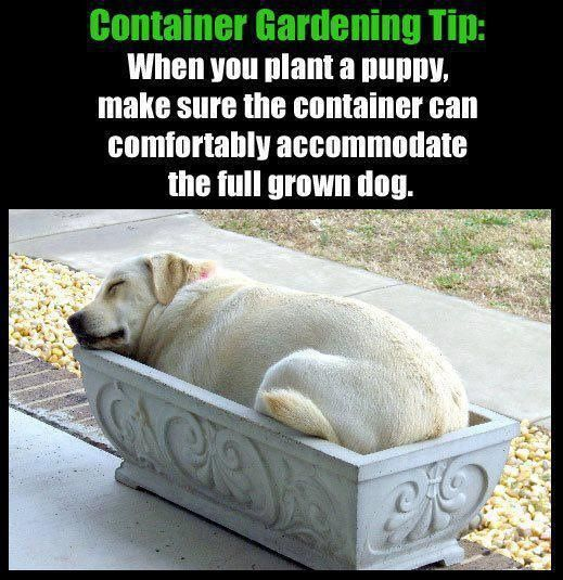 Funny picture for dog lovers and gardeners gardening forums - Gardening for pets ...
