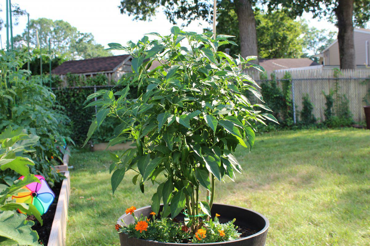 Plantele de inmormantare: Ce este supravietuirea?