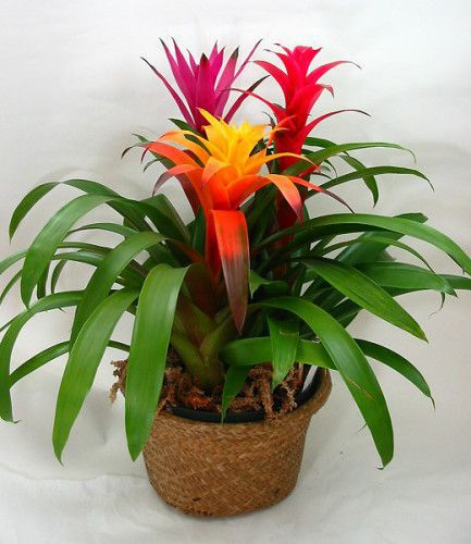 Favorite vibrant plants to grow indoors during the winter for Flowering plants for indoors