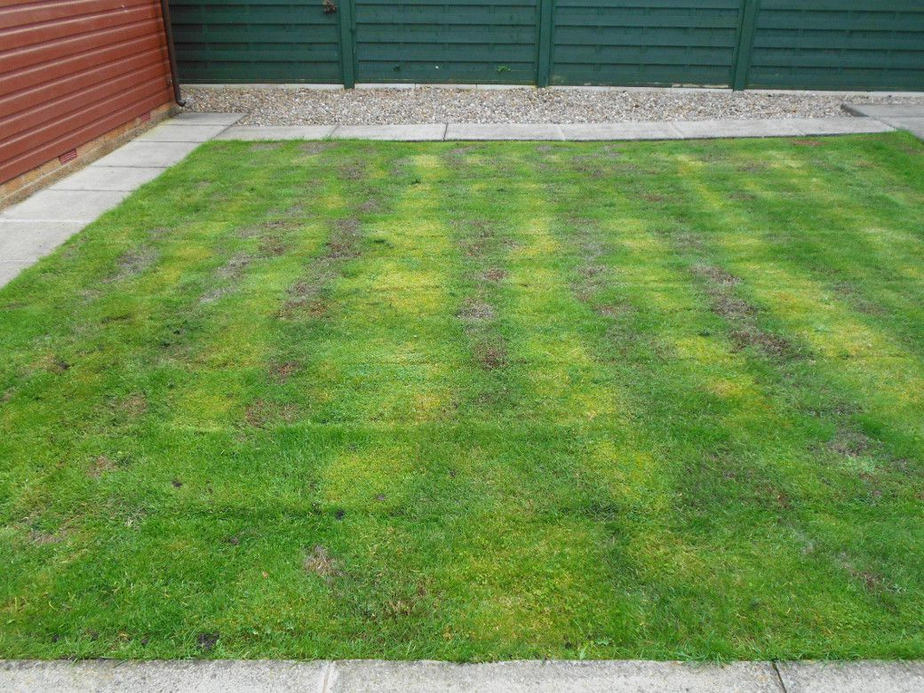 Lawn after weed and feed.jpg