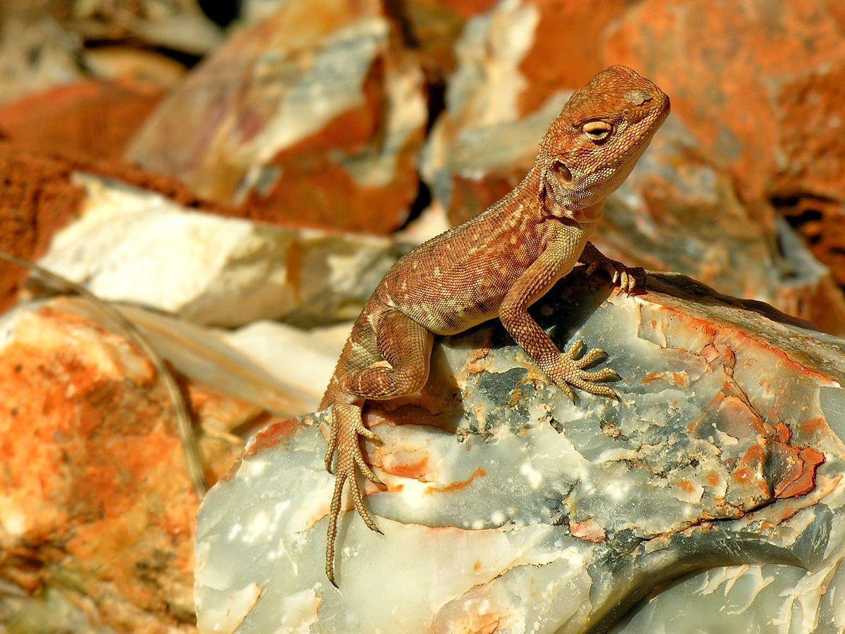 lizard-web.jpg
