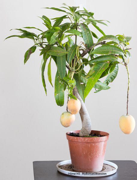 mangoes-20-04.jpg