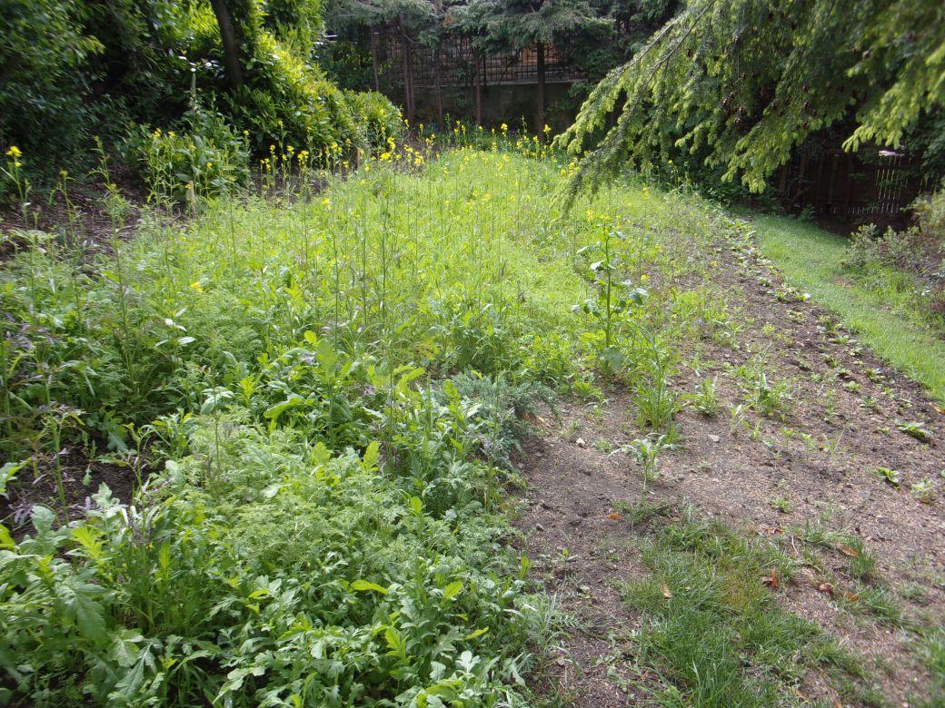 Meadow flowers_001.JPG